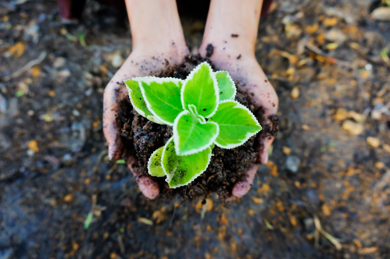 hands holding growing green seedling in soil